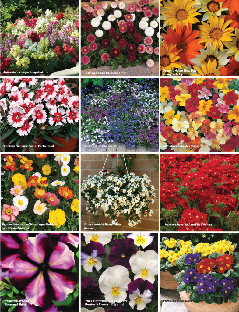 Bedding plants the garden show annuals that will flower before winter and even through winter into spring perish the thought that this is a quiet time in the garden it is a riot izmirmasajfo